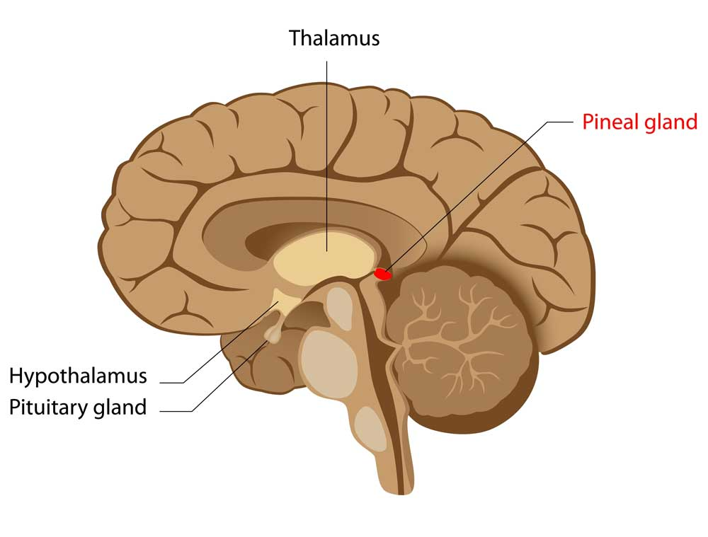 Pineal Region Tumors